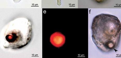 Et le microplancton inventa l'œil | Aux origines | Scoop.it