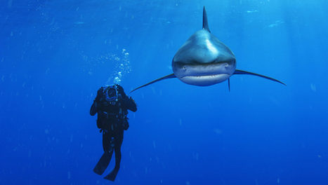 How Brian Skerry tells epic ocean stories, one photo at a time - Mother Nature Network | SCUBA | Scoop.it