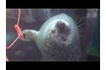 This Seal Wants Your Headphones | Marine Biology | Scoop.it