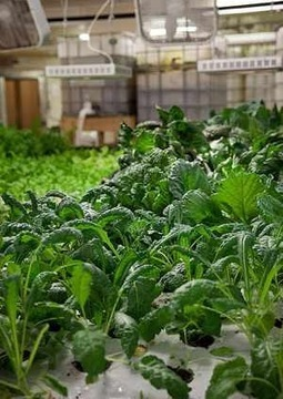 Vast Urban Farm Grows Fish, Food In Old Chicago Meat Plant | The Barley Mow | Scoop.it