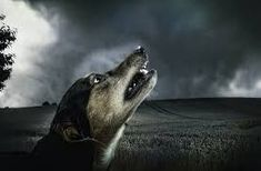 Thunderstorm Phobia in Dogs | Modern dog training methods and dog behavior | Scoop.it