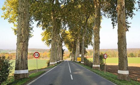 Les arbres de bord de routes, un riche patrimoine paysager appelé à disparaître ? - VMF Patrimoine | Revue de Web par ClC | Scoop.it