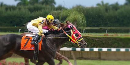 Expert Horse Racing Tips | Central New York Traveler | Scoop.it