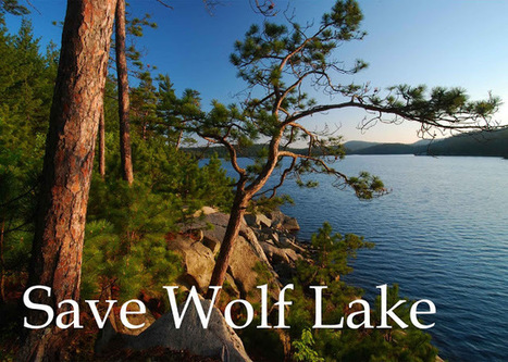 White Wolf: Beautiful timelapse video aims to save ancient forest | All about nature | Scoop.it