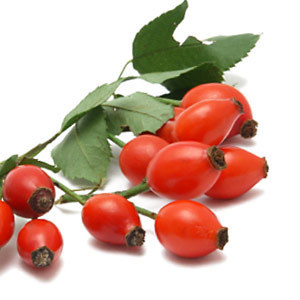 Rosehip Oil Wholesale Supplier and Manufacturer in India | 100% Pure and Orgnic Carriers Oils | Scoop.it