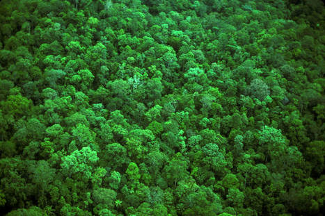 Partnerships, Progress to Protect & Restore Forest | Climate Agreement News | Scoop.it