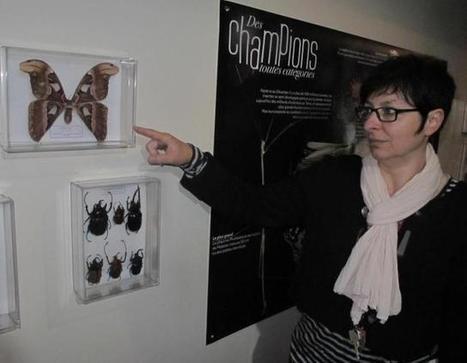 La collection de l'entomologiste Prévost | Espace Mendes France, Poitiers | Scoop.it