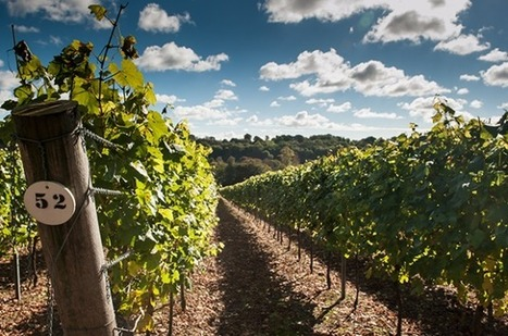 Autumn sun brings hope for English wine's 2016 harvest | Le Vin en Grand - Vivez en Grand ! www.vinengrand.com | Scoop.it