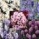 The Cottage Garden Guide | Flowers, Plants and Garden Plant Seeds | Gardening | Scoop.it
