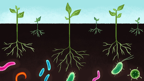 The Secret to Richer, Carbon-Capturing Soil? Treat Your Microbes Well! | Permaculture, Horticulture, Homesteading, Bio-Remediation, & Green Tech | Scoop.it