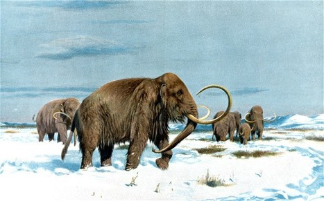 Mammoth fragments raise cloning hopes | Cloning176 | Scoop.it