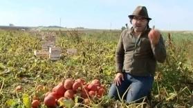 Les circuits courts agroalimentaires, exemple à La Chapelle Saint-Mesmin - France 3 Centre   myfruit - km0 e consegne a domicilio di frutta e verdura   Scoop.it