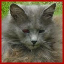 My Cat is a Blind Cat | About Pets, Lifestock and Wild Animals | Scoop.it