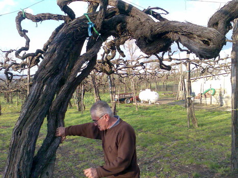 Irpinia and its wines | Amalfi Coast Vacations | Scoop.it