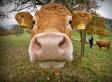 Faites des tournantes rurales   pesticides : un vrai cancer social ?   Scoop.it