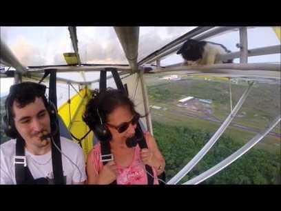 En pleno vuelo se da cuenta de que llevan a un gato en una de las alas | TJmix Mundial | Scoop.it