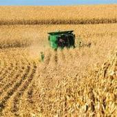 Corn, soybean harvest winding down | AG professional | North Carolina Agriculture | Scoop.it