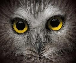 CEEweb - Go Wild Photo Contest (15 Sep, 2014)   ShadowChief   Scoop.it