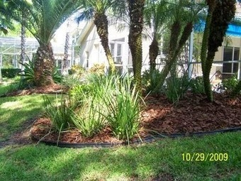 Give a lasting solution to your lawn with professional lawn care services | Landscaping | Scoop.it