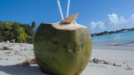 Health hot topic: Is coconut water actually good for you? | Food issues | Scoop.it