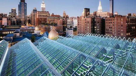 Edenworks Is Building The Future Of Food On UrbanRooftops | Vertical Farm - Food Factory | Scoop.it
