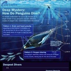 The Ocean's Deepest Divers   Visual.ly   Blue Planet   Scoop.it