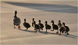 The Art of Followership: Standing Up & For Our Leaders | followership | Scoop.it