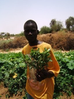 Agriculture : laissons tomber les clichés ! | Questions de développement ... | Scoop.it
