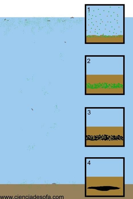 ¿Cómo se forma el petróleo? | Joy & varia | Scoop.it