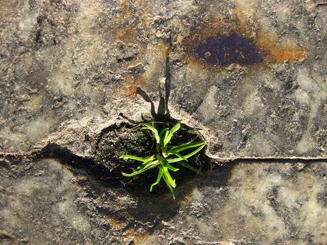 Pavement | La Forza della Natura | The Integral Landscape Café | Scoop.it