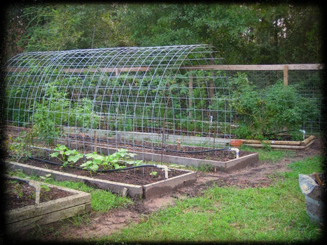 Space-Smart: Trellis Arch Between Raised Beds | Think Like a Permaculturist | Scoop.it