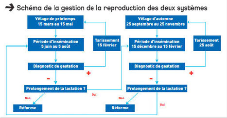 Etude de deux systèmes laitiers contrastés à la ferme expérimentale de la Blanche Maison | Agriculture d'Ille-et-Vilaine | Scoop.it