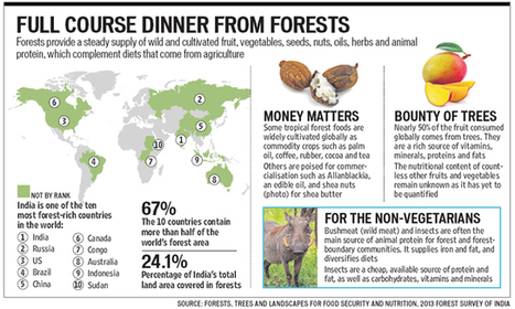 India's vast, rich forests could feed the world   South Asia Food and Nutritional Security   Scoop.it