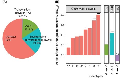 Multilocus resistance evolution to azole fungicides in fungal plant pathogen populations | Crosstalks in Plant-microbes interactions | Scoop.it