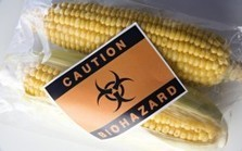 "800 Scientists Demand Global GMO ""Experiment"" End 