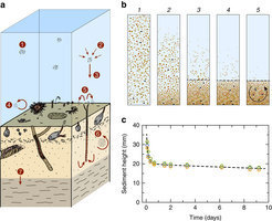 Microbially assisted recording of the Earth/'s magnetic field in sediment | Mineralogy, Geochemistry, Mineral Surfaces & Nanogeoscience | Scoop.it