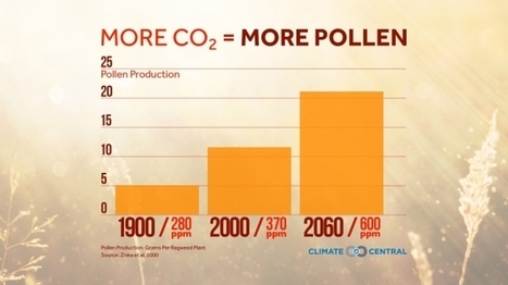 "More CO2 = More Pollen | Climate Central (""bad news for allergy sensitive people"") 