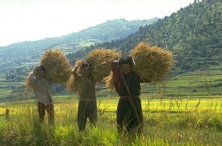 L'agriculture biologique peut nourrir le monde | Les colocs du jardin | Scoop.it