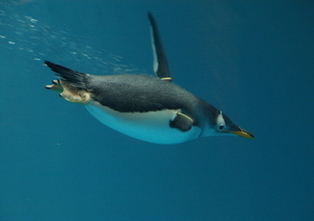 Penguin 4.0 is finally here, Google confirms | Search Engine Watch | Digital Marketing | Scoop.it