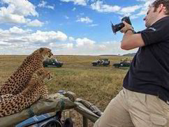 Cheetah stuns safari tour by jumping on truck and using it as ... | Cats Rule the World | Scoop.it