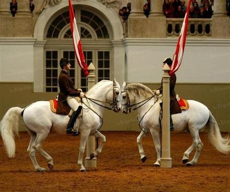 My 'Take Home' from The Best- The Spanish Riding School in Vienna | Gifts | Scoop.it
