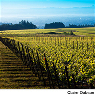 Domaine Drouhin Buys 279-Acre Vineyard in Oregon | Vitabella Wine Daily Gossip | Scoop.it