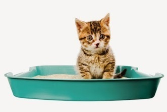 Information Resource on Cat Pet Products: How To Collect the Best Litter Box From Reputed Cat Litter Companies? | Information on Cat Litter | Scoop.it