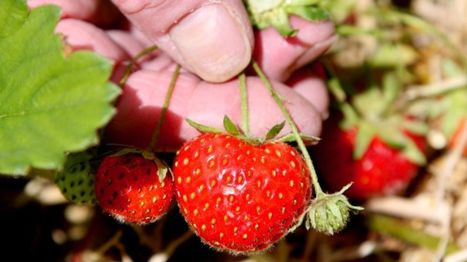 Civic pride 'can help sustain urban biodiversity' - BBC News   GMOs & FOOD, WATER & SOIL MATTERS   Scoop.it