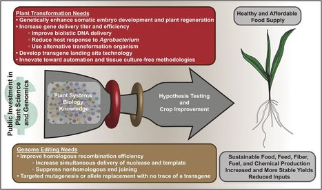Advancing Crop Transformation in the Era of Genome Editing   Plant-Microbe Symbiosis   Scoop.it