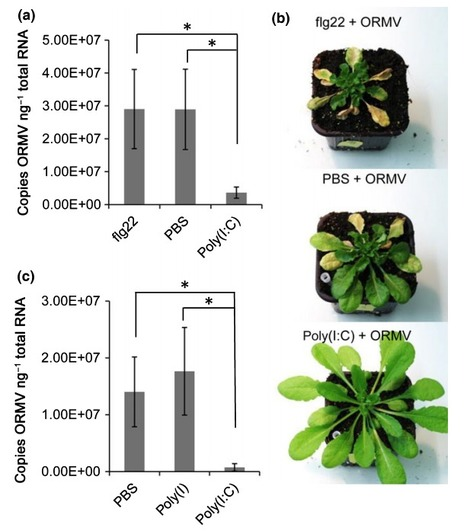 Double-stranded RNAs induce a pattern-triggered immune signaling pathway in plants - New Phytologist 2016 | Extracellular ATP and ectoapyrase in plants | Scoop.it