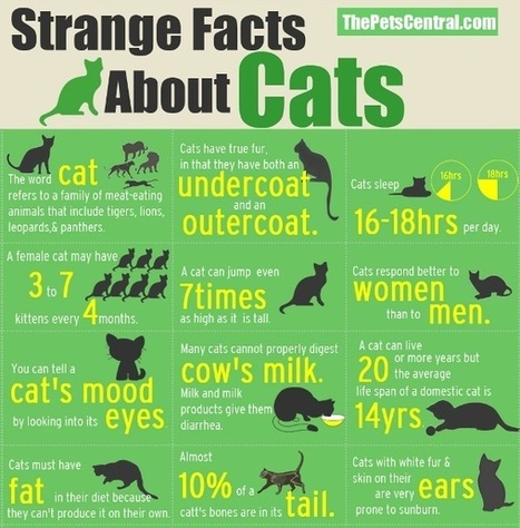 Strange facts about cats | Ce qui m'intéresse | Scoop.it