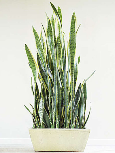8 Indoor Plants You Can't Kill | It's Show Prep for Radio | Scoop.it
