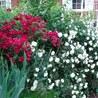 Pollinators: a plant focus, for backyards