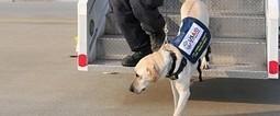 Rescate de víctimas en desastres mediante robots desplegados por perros   VIM   Scoop.it